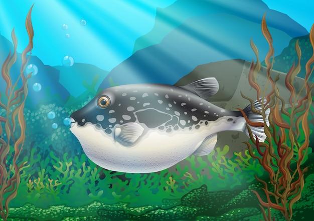 Poisson-globe sous l'océan