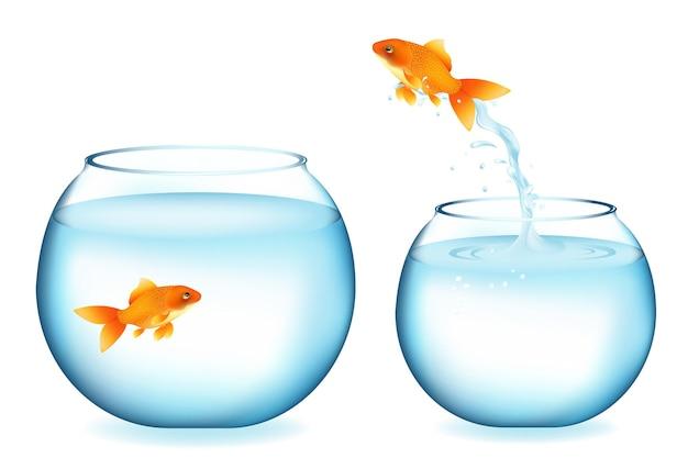 Poisson d'or sautant à d'autres poissons rouges, isolé sur blanc