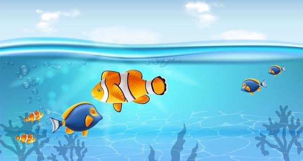 Poisson d'or sous l'eau