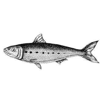 Poisson sardine dessiné à la main