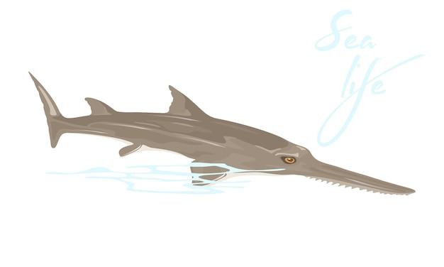 Le poisson-scie ou le requin charpentier est le plus gros poisson avec une longue extension de nez aplati et étroit