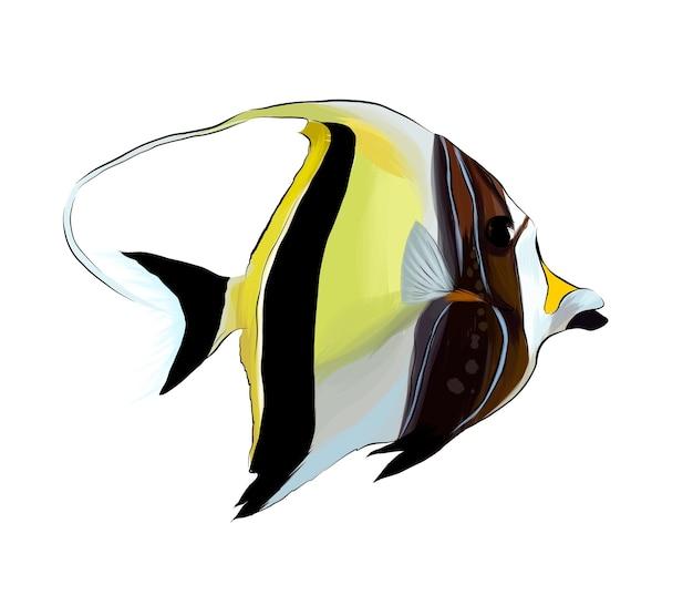 Poisson tropical à cornes zankle poisson exotique zankl idole mauresque à partir de peintures multicolores