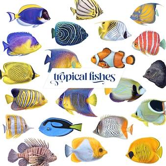 Poissons d'aquarium sous-marin asiatiques exotiques tropicaux colorés lumineux