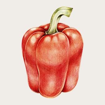 Poivron rouge dans un style dessiné à la main