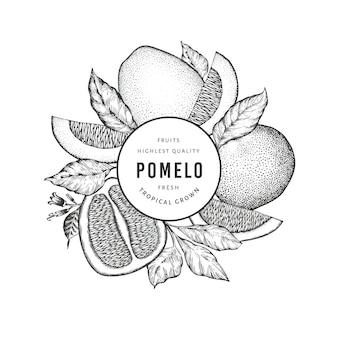 Pomelo de style croquis dessinés à la main. illustration de fruits frais biologiques. modèle de fruits rétro