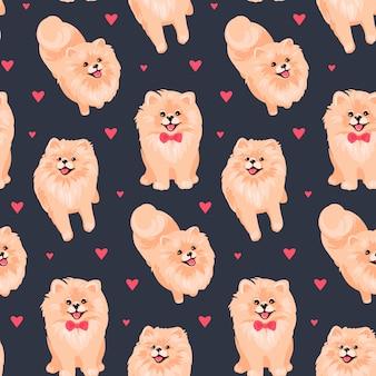 Pomeranian spitz puppy pattern
