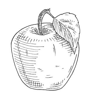 Pomme entière avec feuille vintage vector graver illustration monochrome noir isolé sur blanc