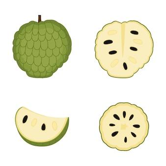 Pomme à sucre, fruit entier, tranche. cherimoya mûr (pomme à la crème). annona, illustration vectorielle
