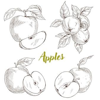 Pommes, branche et feuilles