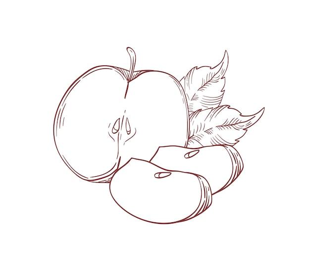 Pommes juteuses moitié et tranches illustration vectorielle réaliste. fruits crus avec des feuilles clipart isolé sur fond blanc. produit de la ferme écologique. éléments de conception dessinés à la main de morceaux de pommes biologiques mûres.