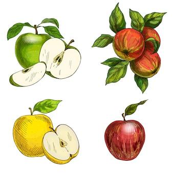 Pommes, pommes dessinées à la main avec des feuilles.