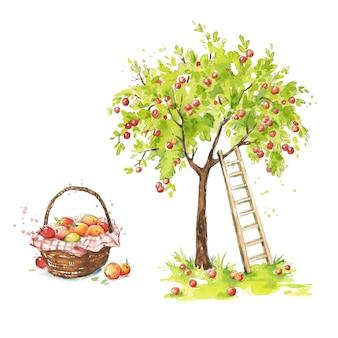 Pommier avec une échelle et un panier de pommes mûres illustration aquarelle de ferme de pommes