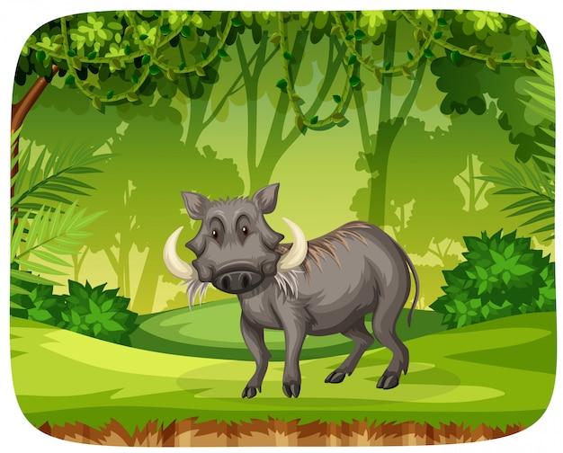 Porc dans la jungle