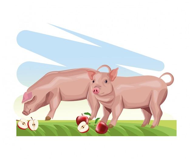 Porcs d'élevage mangeant des pommes fraîches dans l'herbe