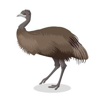 Portrait complet d'oiseau emu