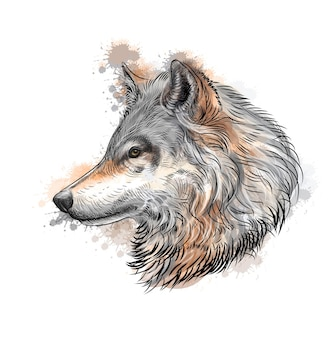 Portrait d'un croquis dessiné main loup avec des éclaboussures d'illustration aquarelles