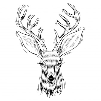 Portrait dessiné de cerf à la main