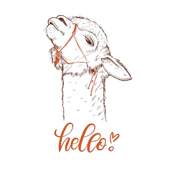 Portrait drôle de lama alpaga. carte de voeux avec la main écrite bonjour.