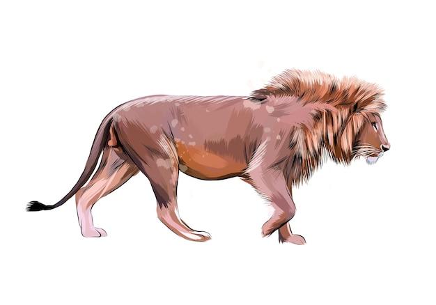 Portrait d'un lion d'une éclaboussure d'aquarelle, croquis dessiné à la main.