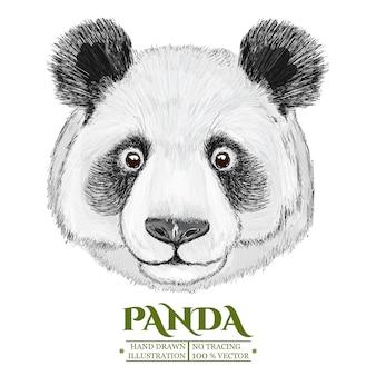 Portrait de panda, illustration vectorisée dessinée à la main