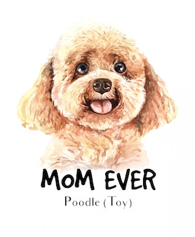 Portrait poodle toy pour l'impression
