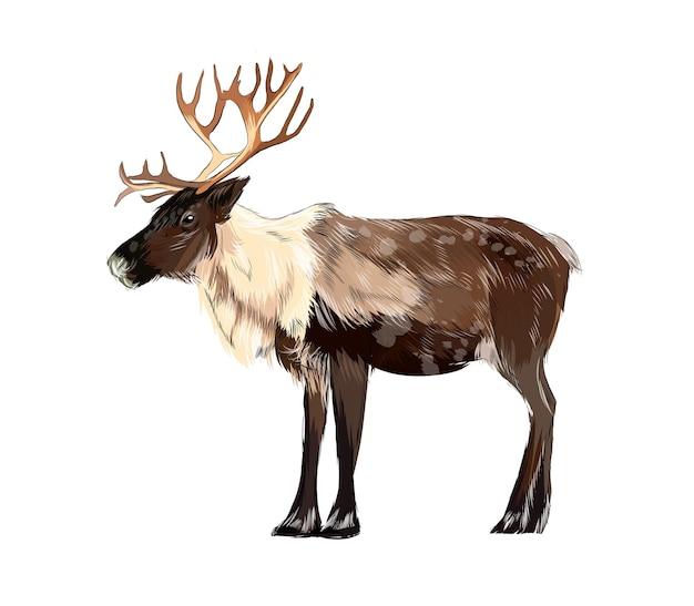 Portrait de reindeer aquarelle sur blanc