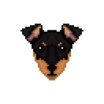 Portrait d'un terrier de manchester