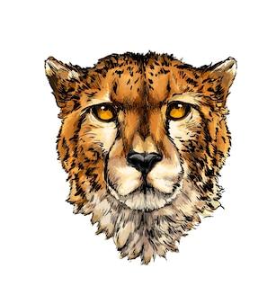 Portrait de tête de guépard à partir d'une touche d'aquarelle