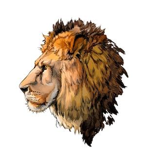 Portrait de tête de lion aquarelle sur blanc