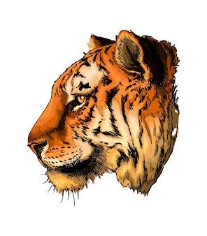Portrait de tête de tigre aquarelle sur blanc