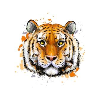 Portrait de tête de tigre à partir d'une éclaboussure d'aquarelle, dessin coloré, réaliste. illustration vectorielle de peintures