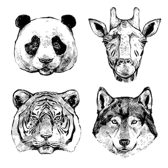 Portraits d'animaux dessinés à la main