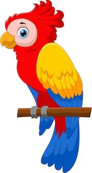 Pose de dessin animé mignon perroquet