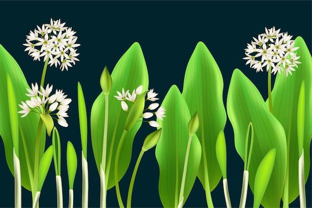 Poster oignon de printemps ramson et ail sauvage