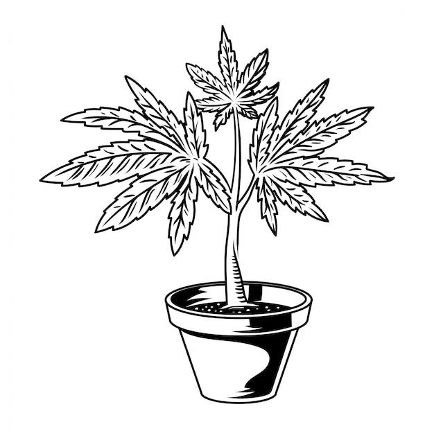 Pot de fleur vintage avec plante de feuille de cannabis marijuana weed vert chanvre