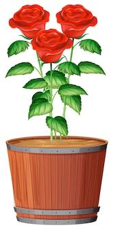 Un pot de plante rose