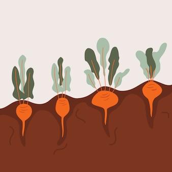 Potager bio aux légumes racines.