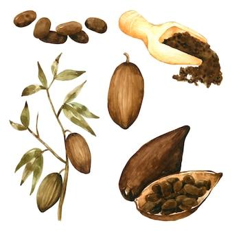 Poudre de graines de cacao et dessin à la main de feuilles à l'aquarelle