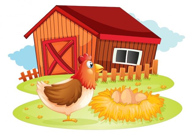 Une poule et ses oeufs dans la cour