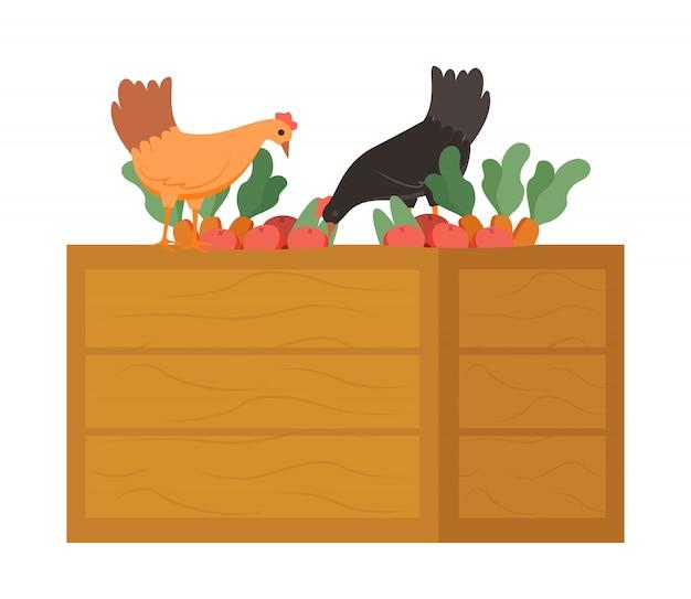 Poulet sur une boîte en bois, manger des carottes