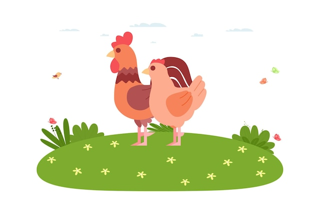Poulet. oiseau domestique et animal de ferme. le coq et la poule sont debout sur la pelouse. illustration vectorielle dans un style plat de dessin animé.