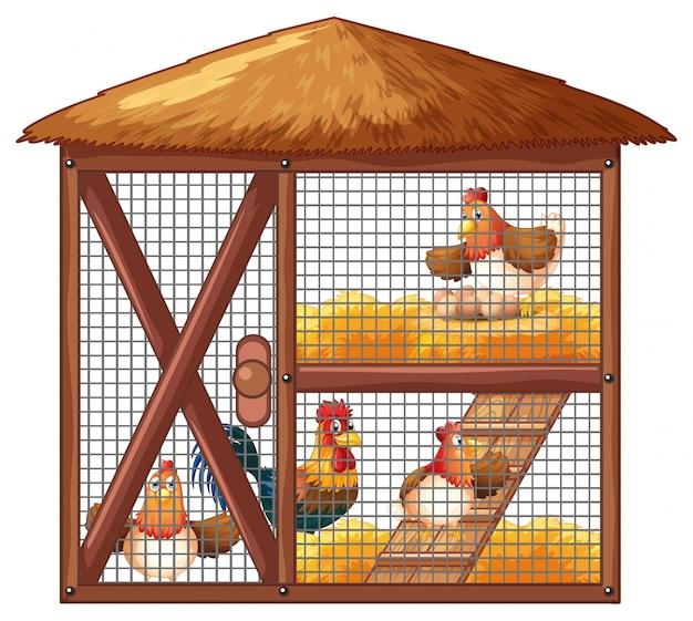 Poulets dans un poulailler