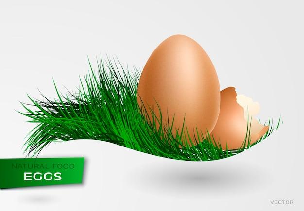 Poulets d'oeuf réalistes. pâques, poulet, naissance illustration vectorielle 3d