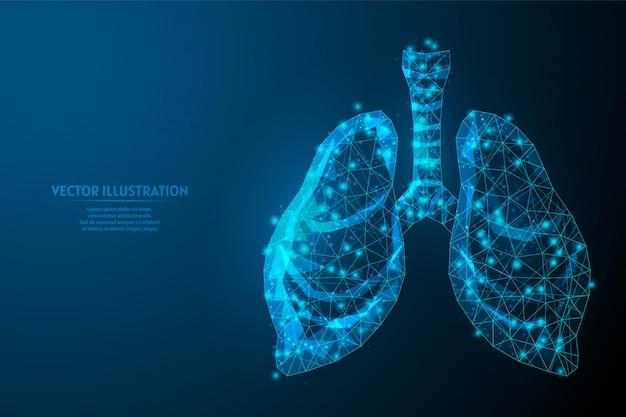 Poumons humains et trachée. anatomie des organes. pneumonie à coronavirus, cancer, greffe d'organe, tuberculose, asthme. technologie médicale innovante. illustration filaire 3d low poly.