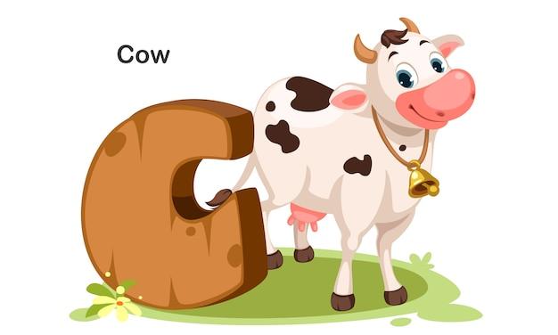 C pour vache