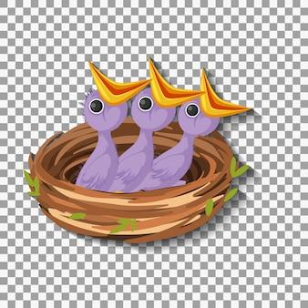Poussin affamé en attente de nourriture dans le nid