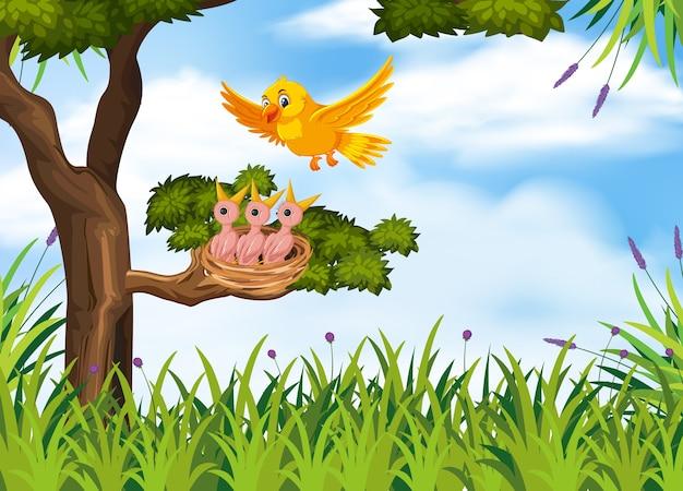Poussins affamés sur le nid