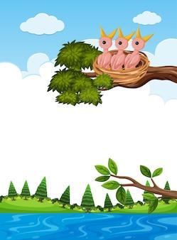 Poussins au nid sur une branche d'arbre