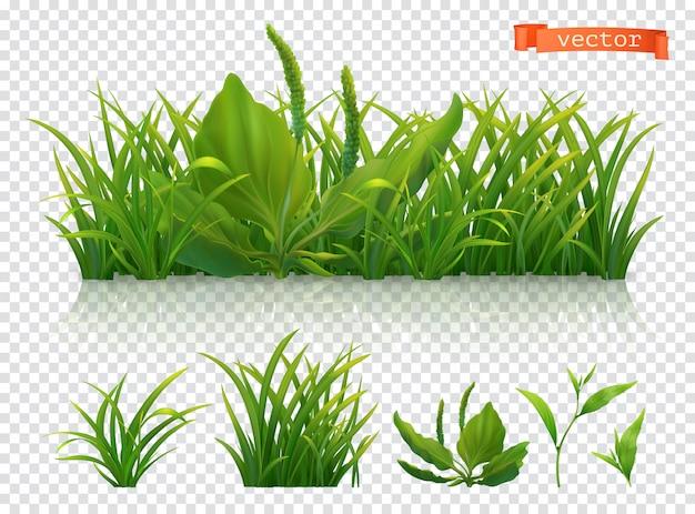 Printemps. herbe verte, ensemble réaliste 3d