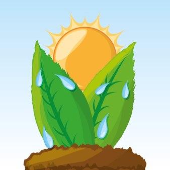 Processus de photosynthèse dans les plantes